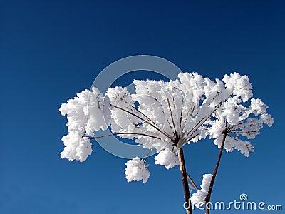Whit för 2 glaserad växter