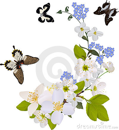 Free White And Blue Flower Branches With Butterflies Royalty Free Stock Images - 16395749
