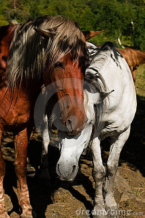 Free White And Brown Horse Royalty Free Stock Photos - 10425648