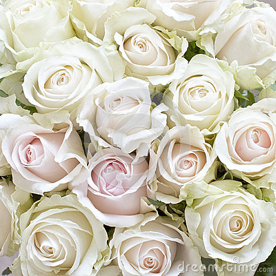 Free White And Pale Pink Roses Stock Photo - 61903610