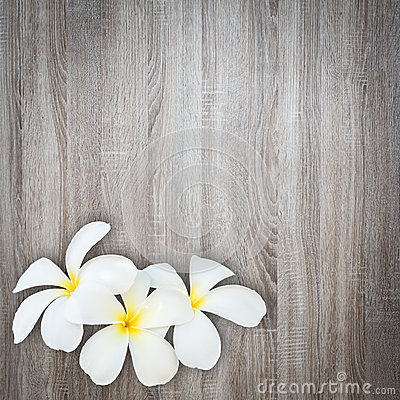 Free White And Yellow Frangipani Flower On Wood Background Royalty Free Stock Photography - 55391447
