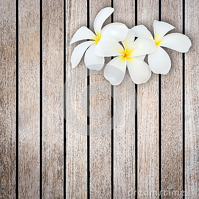 Free White And Yellow Frangipani Flower On Wood Background Royalty Free Stock Images - 55391459
