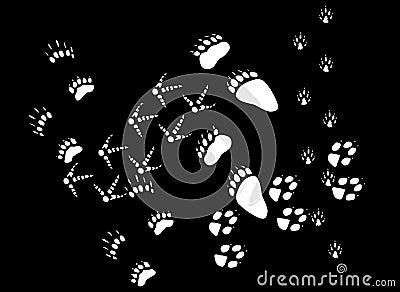 White animals footpath