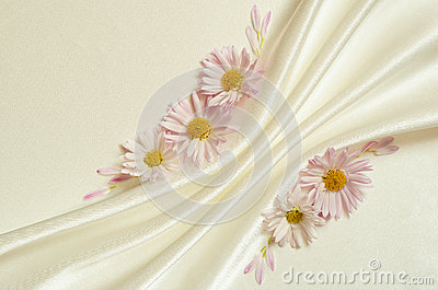 White background with folds and daisies