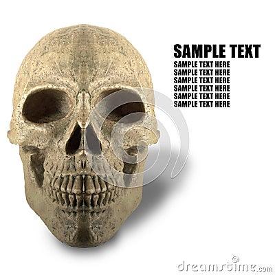 White background of skeleton