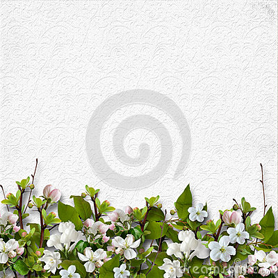 Free White Background With A Border Of Apple Blossoms Royalty Free Stock Photo - 53032045