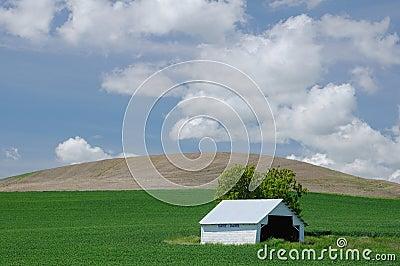 White barn in green farmlands