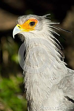 White bird with orange around eyes