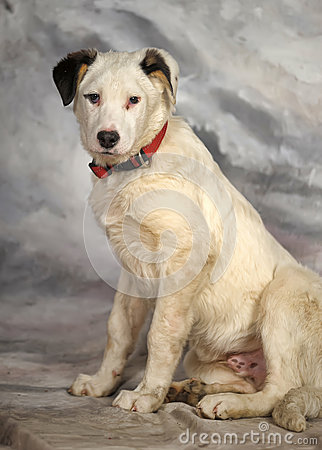 White with black spots puppy Stock Photo