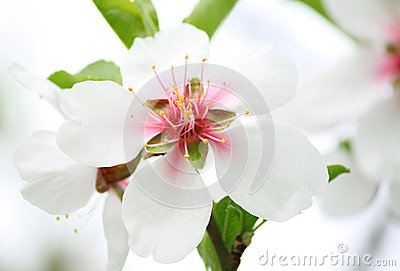 White blossom on tree