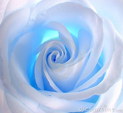 Free White - Blue Rose Royalty Free Stock Image - 622696