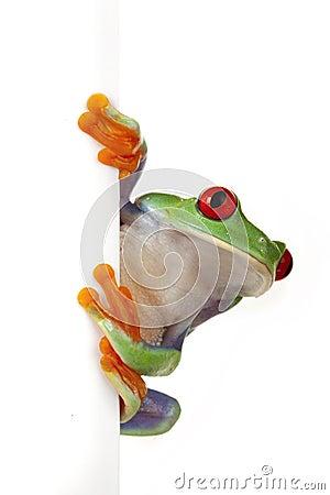 White Board Frog