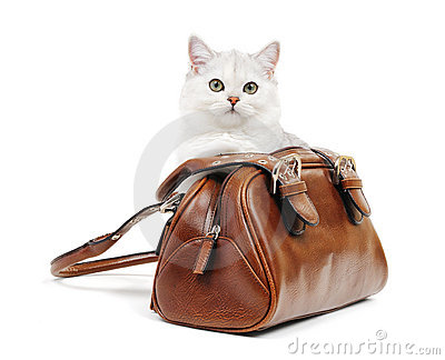 White british cat in a handbag