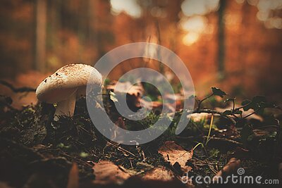White And Brown Mushroom Beside Green Leaf Plant Free Public Domain Cc0 Image