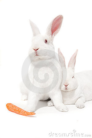 White bunnies on white