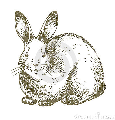 White bunny drawing