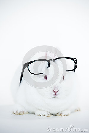 White bunny wearing human glasses on its head