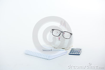 White bunny wearing human glasses with stationary and calculator
