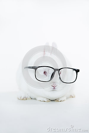 White bunny wearing human glasses