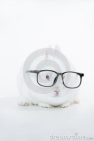 White bunny wearing human glasses