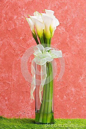White Calla Lily Royalty Free Stock Images - Image: 28902179