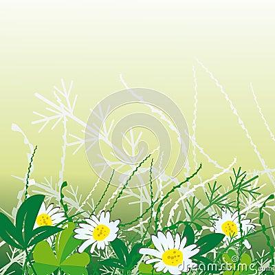 White camomiles in grass