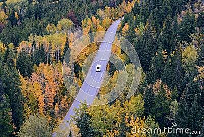 White Car Traveling Near Trees During Daytime Free Public Domain Cc0 Image