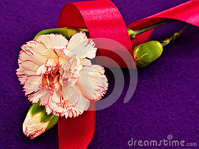 White Carnation and Pink Ribbon