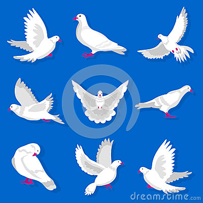 White cartoon pigeon with red beak and paws illustrations set Vector Illustration