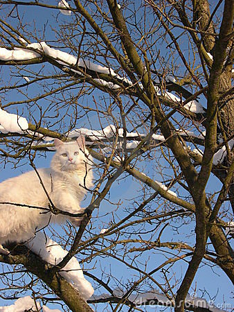 Free White Cat And Winter Tree Stock Photography - 1627972