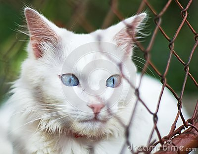 White cat behind grid