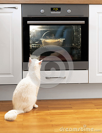 Free White Cat Is Watching Food. Stock Photos - 70729333