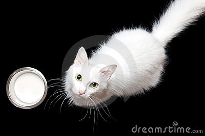 White cat & milk