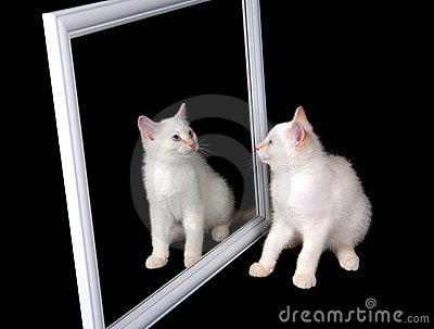 White cat in a mirror