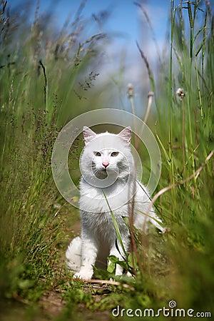 White cat sitting