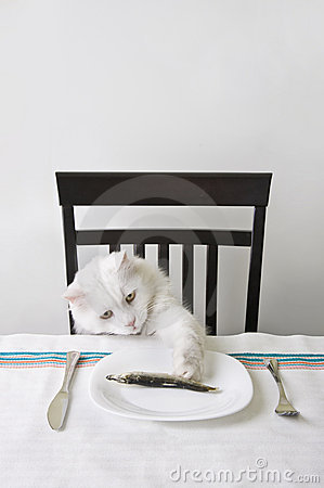 White cat a fish