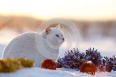 White cat on snow