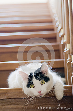 White cat on a stairs