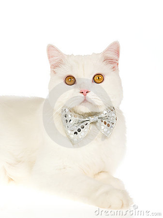 Free White Cat Wearing Bow Tie Stock Photos - 10310243
