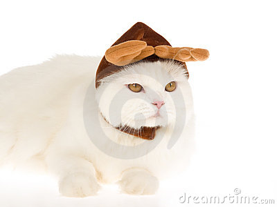 White cat wearing reindeer hat cap