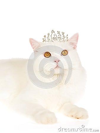 White Cat Wearing Tiar...