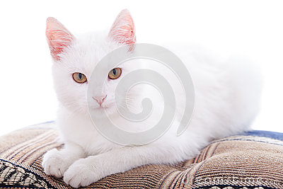 White cat on a white bacgroung
