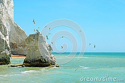 White chalk cliff with birds