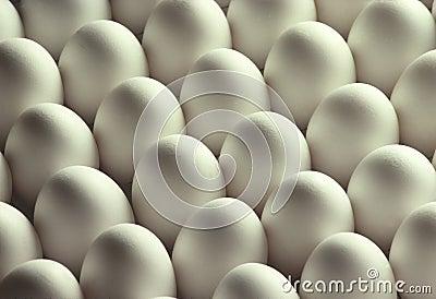 White Chicken Eggs