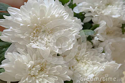 white chrysanthemum bouquet stock images  image, Beautiful flower