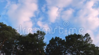 White clouds quickly fly over sky above forest. White clouds quickly fly over sky above the forest stock video