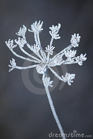 Free White Cold Frost Stock Photos - 7602643