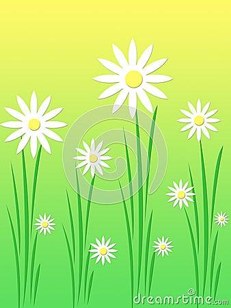 Free White Daises Stock Photos - 793123