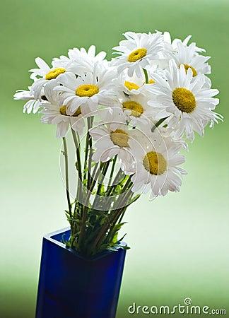 Free White Daises Stock Photos - 7986873