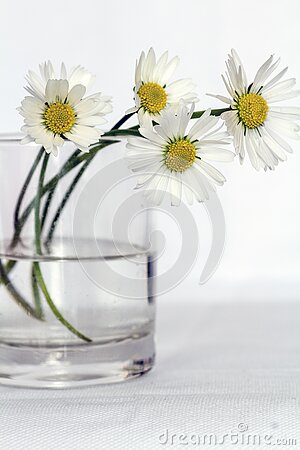White Daisies In Glass Vase Free Public Domain Cc0 Image